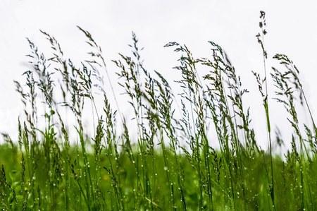 AVIS - Vente publique de la récolte d'herbe sur pied pour la saison 2020 sur parcelles communales