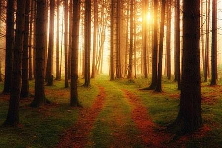 Les forêts de notre commune certifiées PEFC