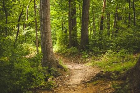 Plan d'aménagement des bois communaux de Habay